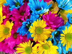 daisies-54663_960_720
